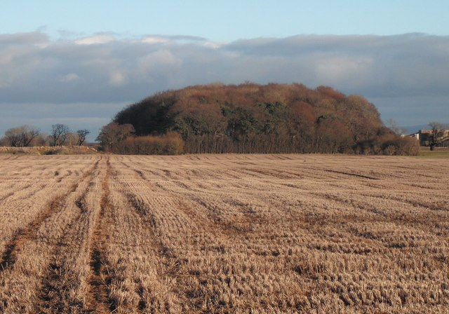 Crops and copse