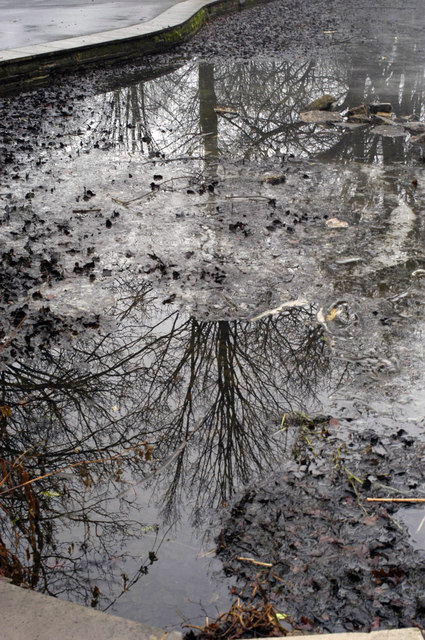 Tree in a pond