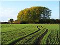 SP7505 : Farmland, Ilmer by Andrew Smith