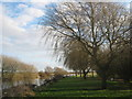 TR2863 : Willow Trees beside the River Stour by David Anstiss