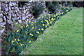 SW8040 : Early daffodils at Carnon Downs by Fred James