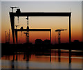 J3575 : The most famous cranes in Belfast : Week 3