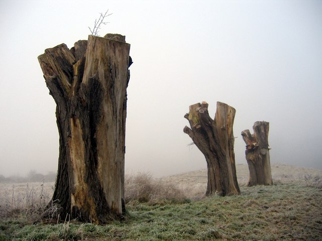 Three stumps on the Earl's Eye