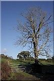 T1957 : Leafless Tree by kevin higgins
