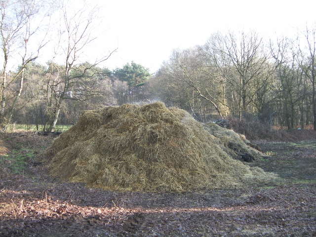 Steaming manure