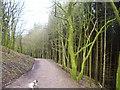 SJ9670 : Track near Nessit hill. by steven ruffles