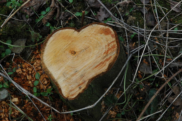 Heart-shaped tree stump