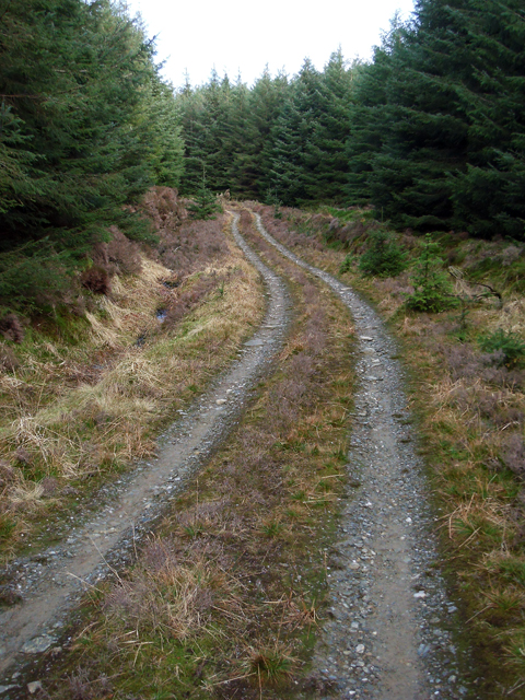 Forestry Track - North Kintyre