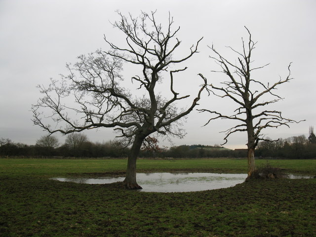bare trees by the pond 169 don cload cc by sa 2 0