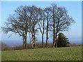 SU9415 : Deer seats, Woolavington Down by Robin Webster