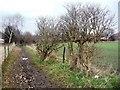 SE3610 : Vestigial winter hedgerow by Christine Johnstone