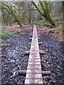 SW6032 : Boardwalk in Godolphin Woods by Rod Allday