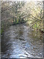 SX1265 : The River Fowey downstream from New Bridge by Rod Allday