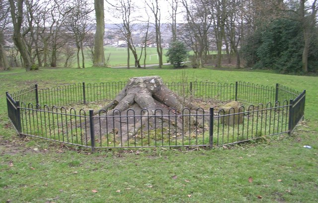 Fossil Tree - Bowling Park