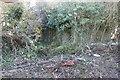 SU4787 : Nature's camouflage by Bill Nicholls