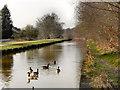 SJ7699 : The Bridgewater Canal, Monton by David Dixon
