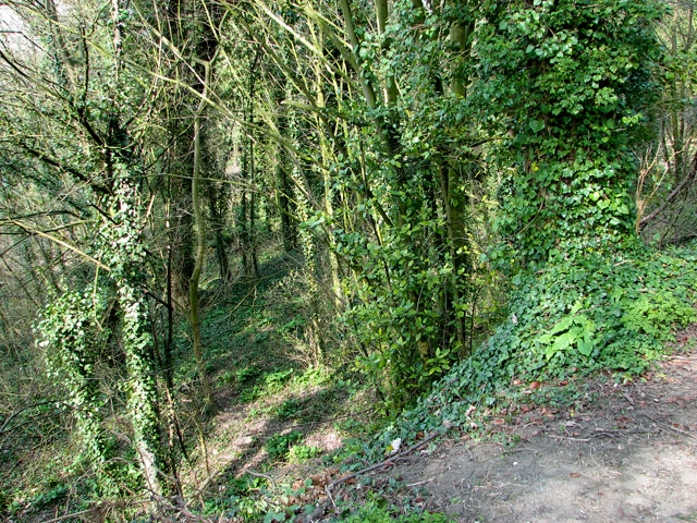 Danby Wood nature reserve