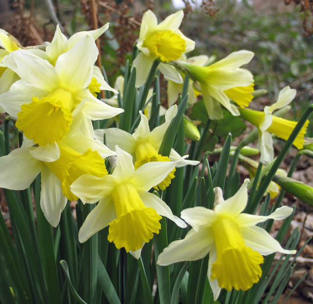 compare contrast daffodils stopping by woods Get an answer for 'compare and contrast frost's the road not taken and stopping by woods on a snowy evening' and find homework help for other the road not taken questions at enotes.