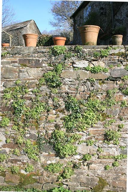 Pots on garden wall