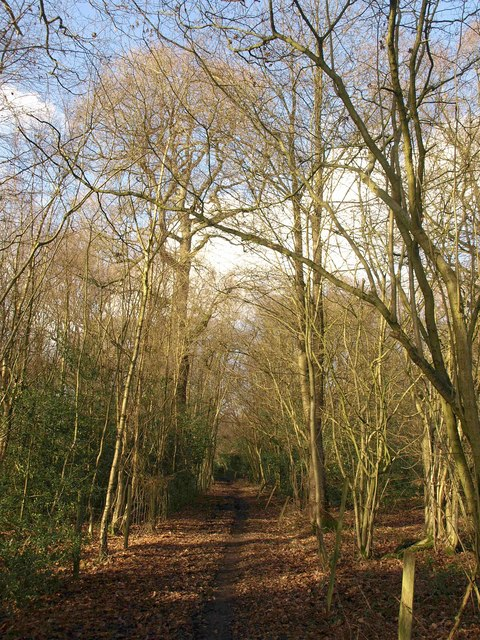 Bridleway, Queen's Wood