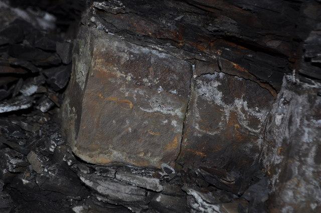 Duckmanton Railway Cutting Fossils 169 Ashley Dace Cc By