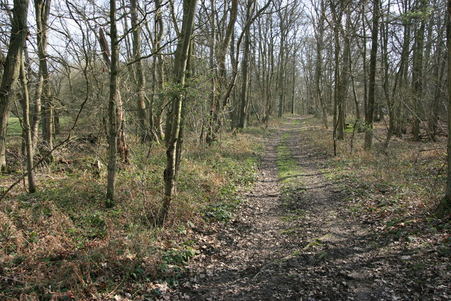 Footpath through the woods near Send Prison