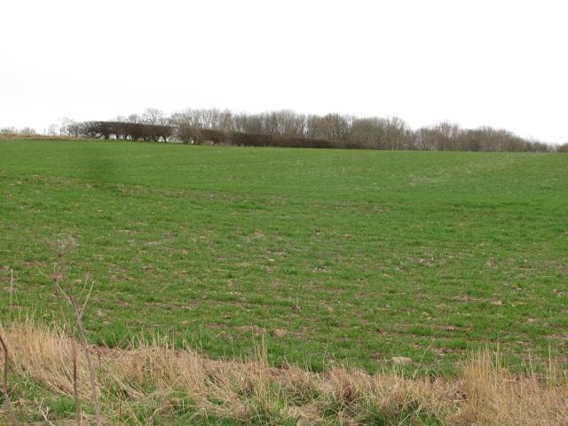 Millerton Hill