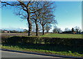 SJ8176 : Countryside at Little Warford, Cheshire by Anthony O'Neil