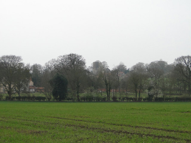 Field of winter wheat, with Marsham church behind the trees