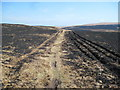 SN9169 : Bridleway across burnt moorland on Esgair Perfedd by Younger1978