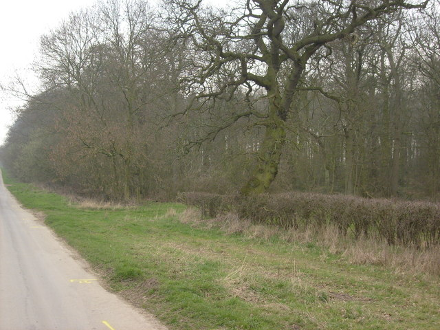 Lockington Wood