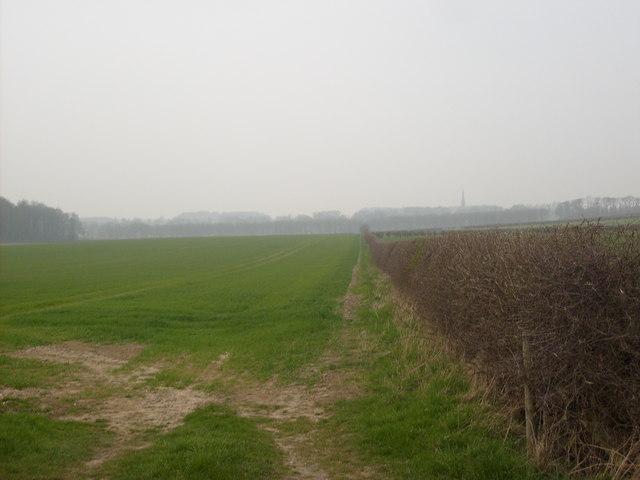 Hedgerow near Warter Crossroads