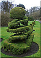 SD4616 : Corkscrew topiary, Rufford Old Hall : Week 14