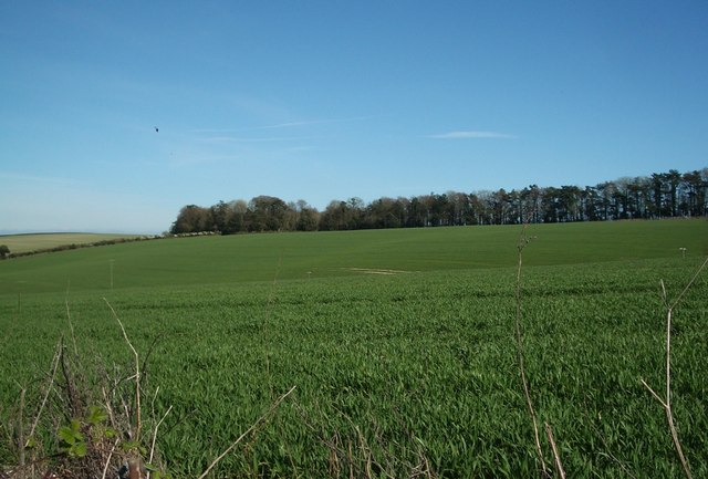 Crop Fields near Bradford Peverell in early Spring