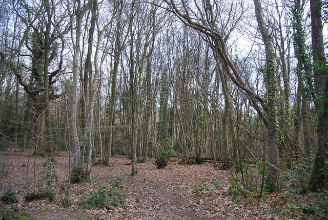 Coppicing, Church Wood