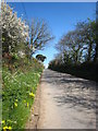 SW9251 : Spring flowers and blossom along the lane to Trelion by Rod Allday