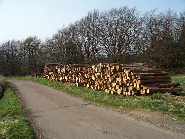 Timber crop