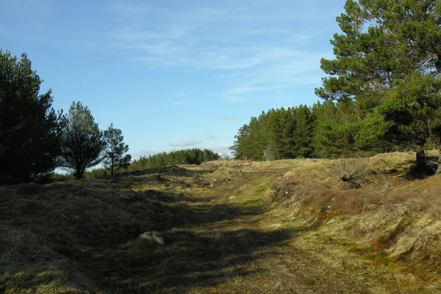 Forest track on Pollie Hill
