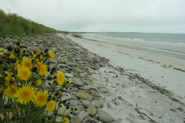 Shore detail, Bay of Lopness, Sanday