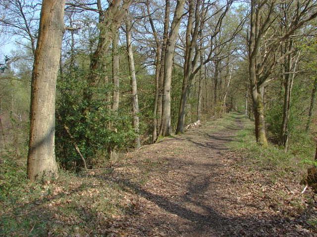 Railway embankment, Pirbright Barracks