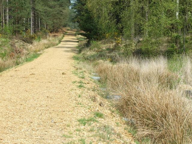 Forest Track, Boveridge Heath