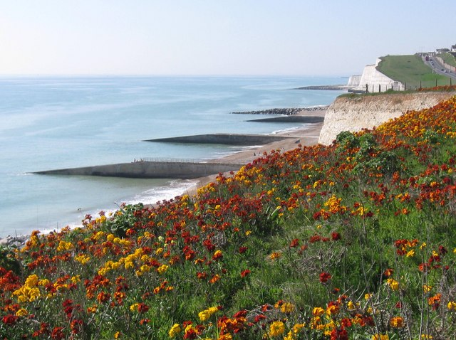 Wallflowers at Saltdean