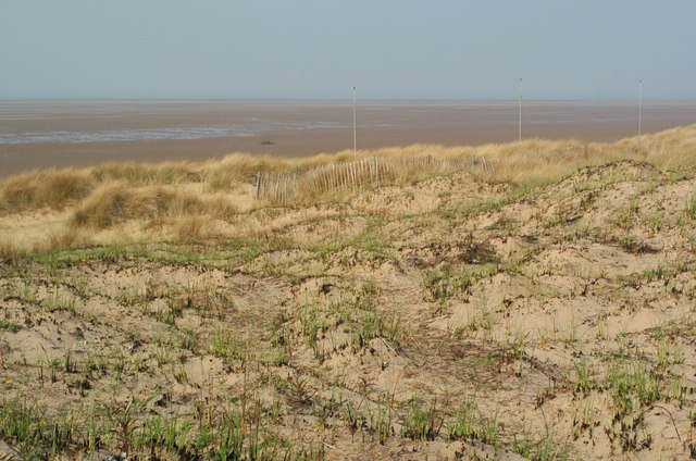 Marram re-growth after burning at Raven Meols
