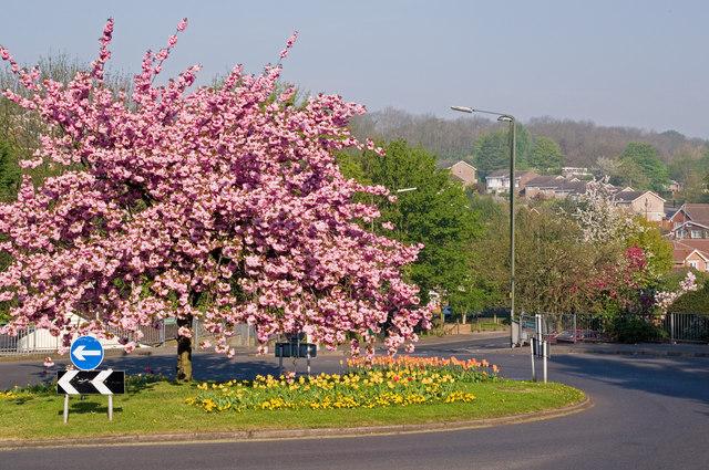 Sunningvale Avenue/Stock Hill/Norheads Lane Roundabout