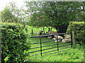 SE6783 : Sheep sheltering from the April heat by Pauline E