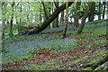 SD6523 : Bluebell woods near Higher Whitehalgh Farm by Bill Boaden