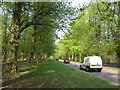SK6377 : Lime tree avenue, Clumber Park by Peter Turner