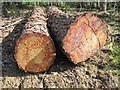 NT4666 : Pine logs, Saltoun Big Wood by Richard Webb