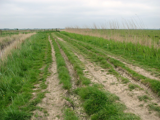 Track along The Fleet, Halvergate Marshes