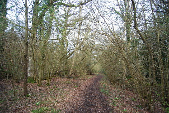 Wey South Path, Fir Tree Copse